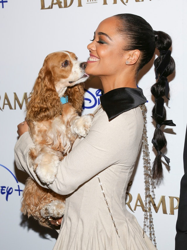 Tessa Thompson's bubble ponytail at Lady and the Tramp screening